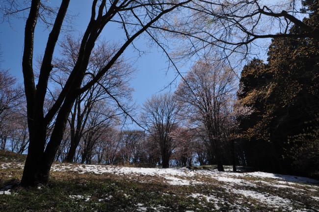 美の山_0066