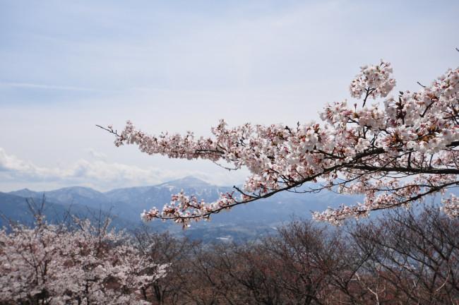 美の山_0125