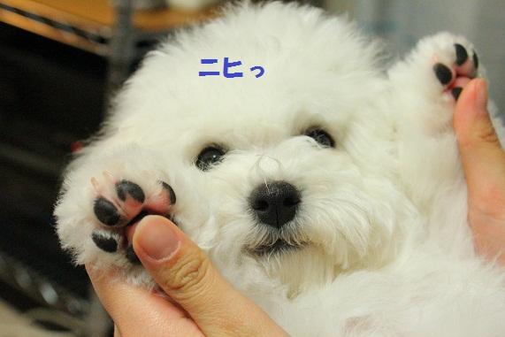27_20121231004909.jpg