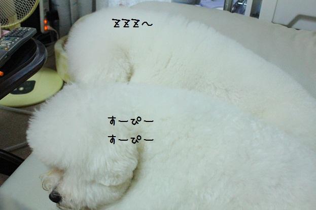 3_20121125224801.jpg