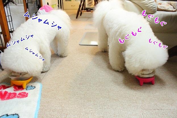 4_20130309170359.jpg
