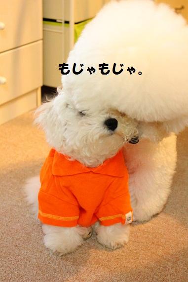 52_20120427002445.jpg