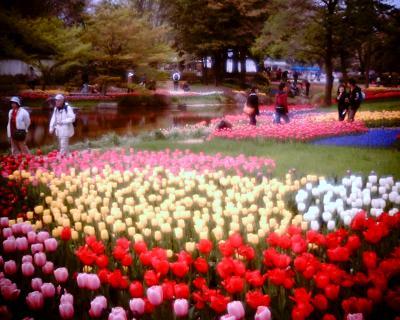 チューリップ2:Entry:昭和記念公園