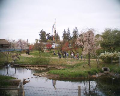 こいのぼり・昭和記念公園:R2