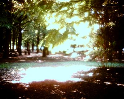木漏れ日・代々木公園:Entry