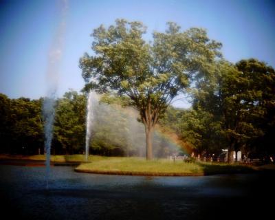 噴水の虹・代々木公園:Entry