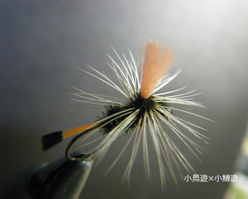 IMGP0356.jpg