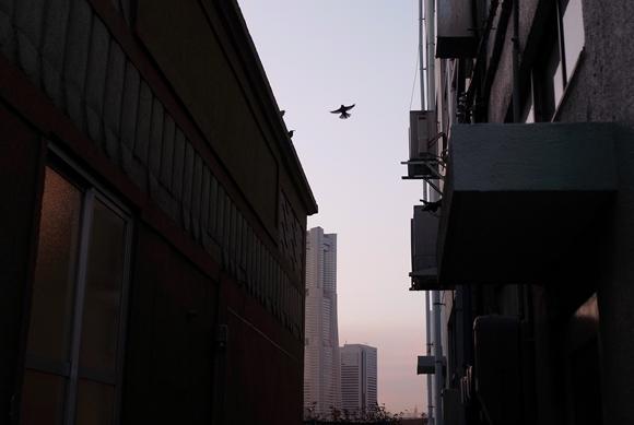 横浜寸景-51_R