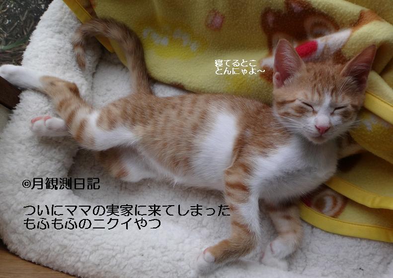 20120922tsuki1.jpg