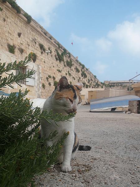 Valletta_02