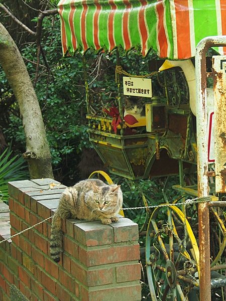 cats_P09