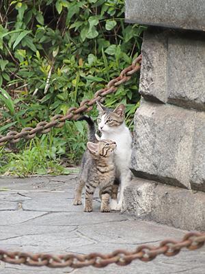 kiji_oyako_05