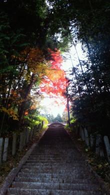 IZANAGI 雨垂れ石を穿つ-2011112910090000.jpg
