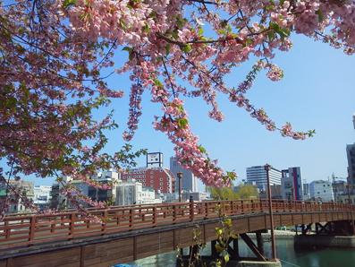 常盤橋と桜