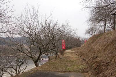 津山市神代梅の里公園 梅開花状況(平成25年2月26日現在)