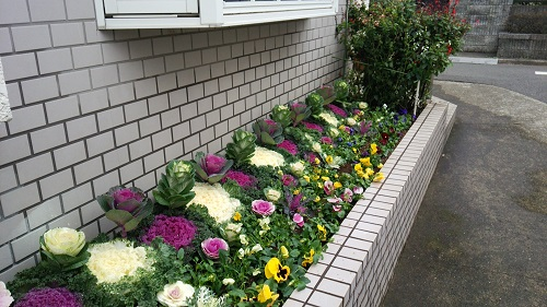 花壇 2014 12 ハボタン