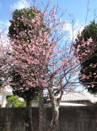 DSC05407 - 桜