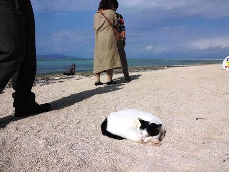 名物?浜猫