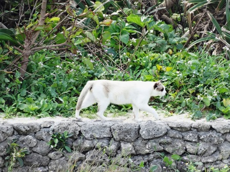 コンドイ浜ガングロ猫