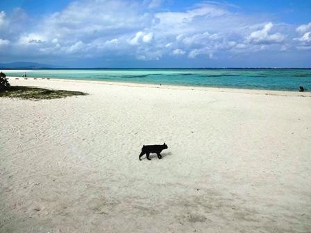 コンドイ浜黒猫B