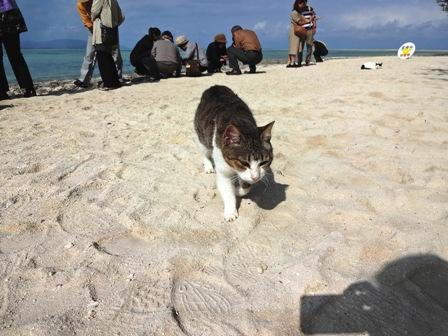 星砂の浜・キジトラ猫
