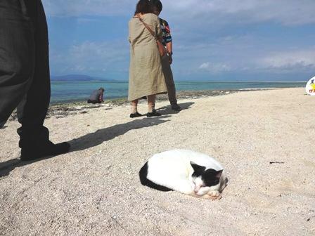 星砂の浜・白黒猫