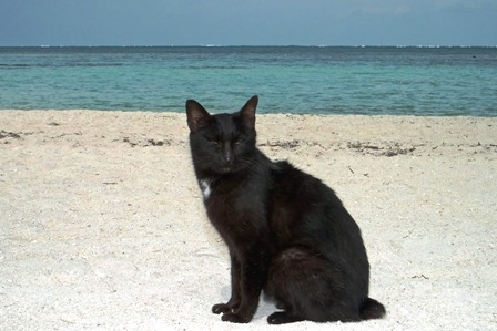 コンドイ浜の黒猫