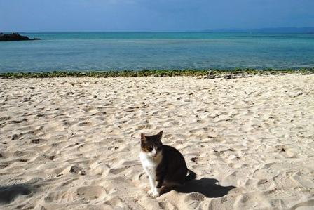 星砂の浜の三毛猫