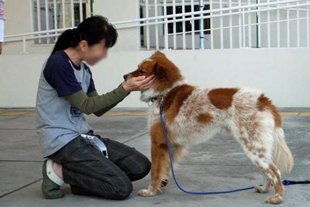 DSCF4620 - 迷子犬