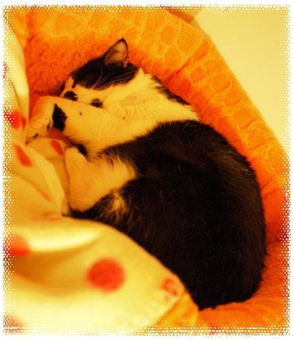 水曜日の夜のネコ