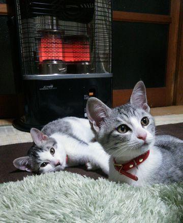アリス&リリィちゃん