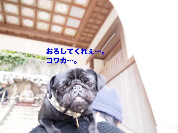 P4165714ブログ_convert_20120430193537
