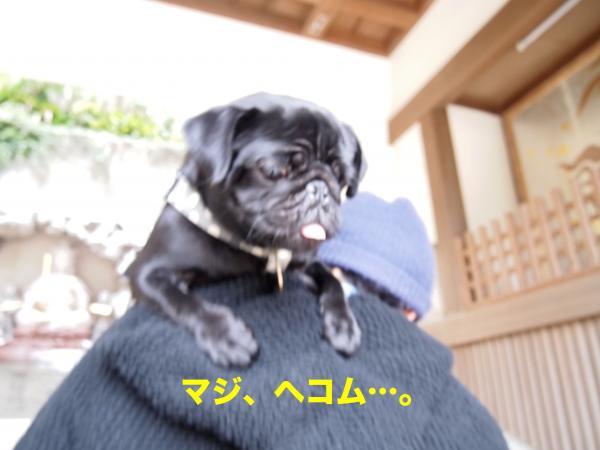 P4165715ブログ_convert_20120430193938