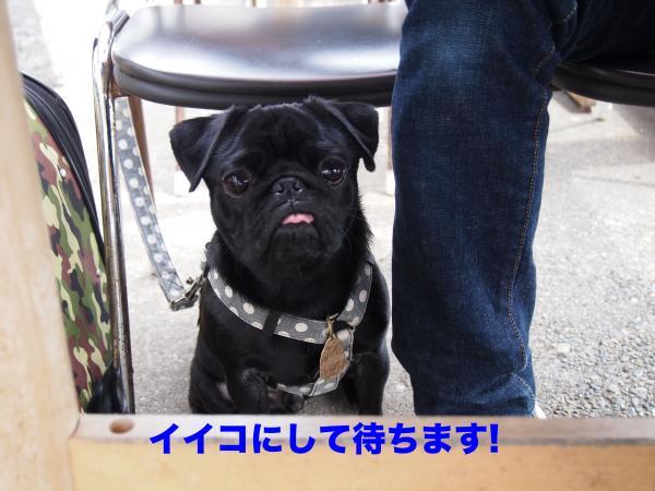 P4165760ブログ_convert_20120503084453