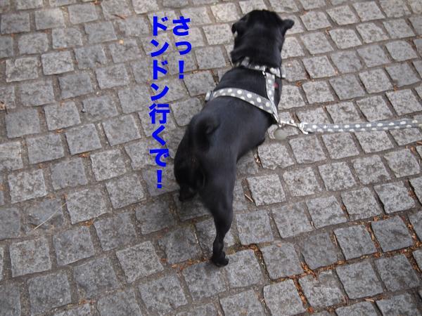P4165736ブログ_convert_20120503084332