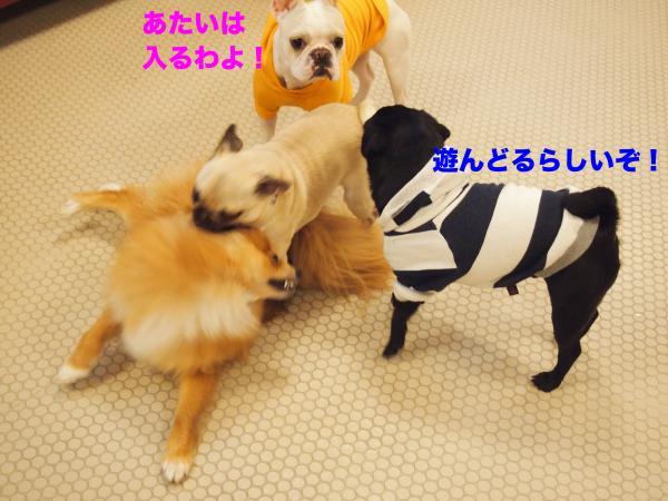 P4225961ブログ_convert_20120504171728
