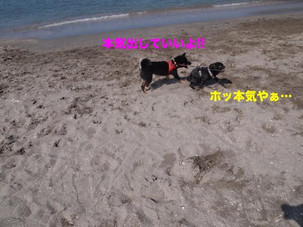 P4296011ブログ_convert_20120520115256