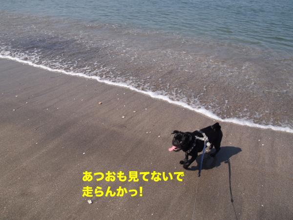 P4296005ブログ_convert_20120520115228