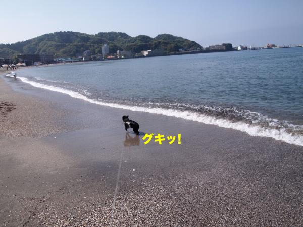 P4295989ブログ_convert_20120520115209
