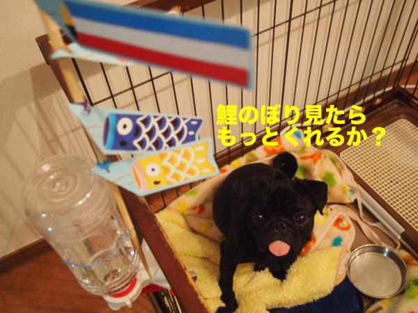 P5056320ブログ_convert_20120527203406