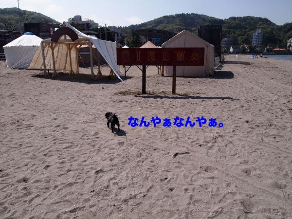 P4296024ブログ_convert_20120528230418