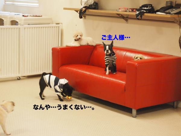 P4225946ブログ_convert_20120529211556