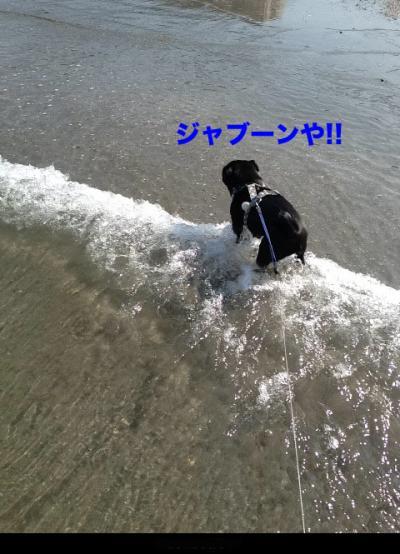 IMG_1984_convert_20120812203148.jpg