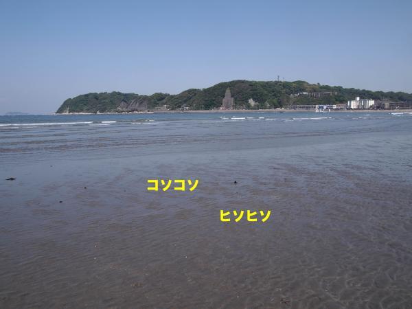 P5196474_convert_20120604232512.jpg
