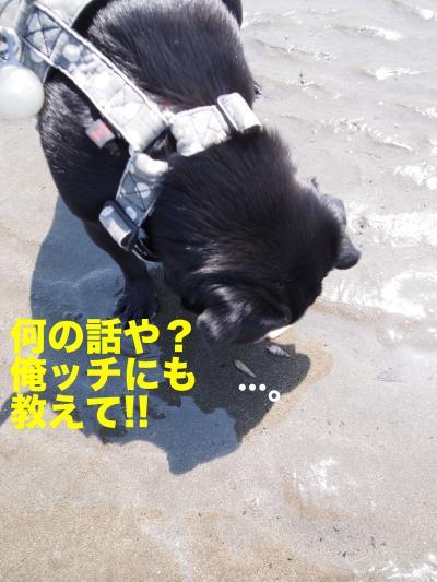 P5196476_convert_20120604232553.jpg