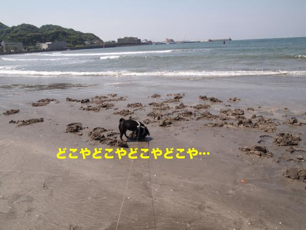 P5196489_convert_20120722201600.jpg