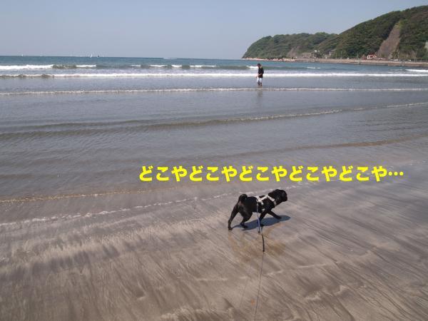 P5196492_convert_20120722201617.jpg