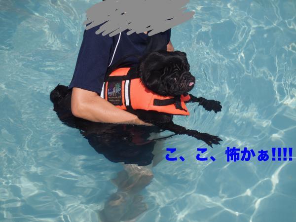 P9157437_convert_20120917194907.jpg