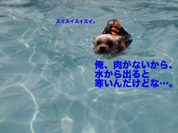 P9157456_convert_20120917195054.jpg