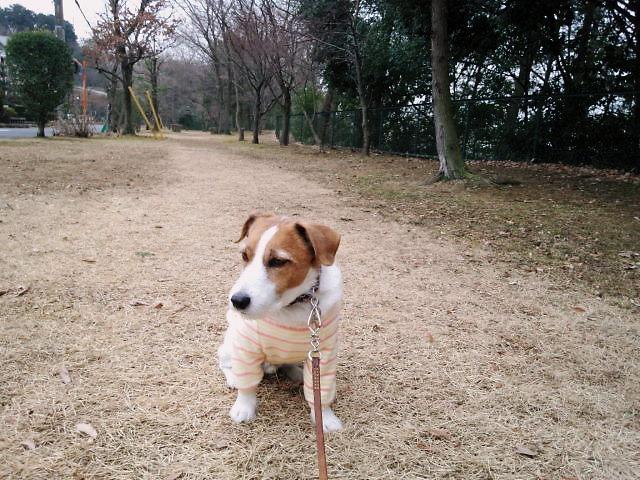2014散歩011
